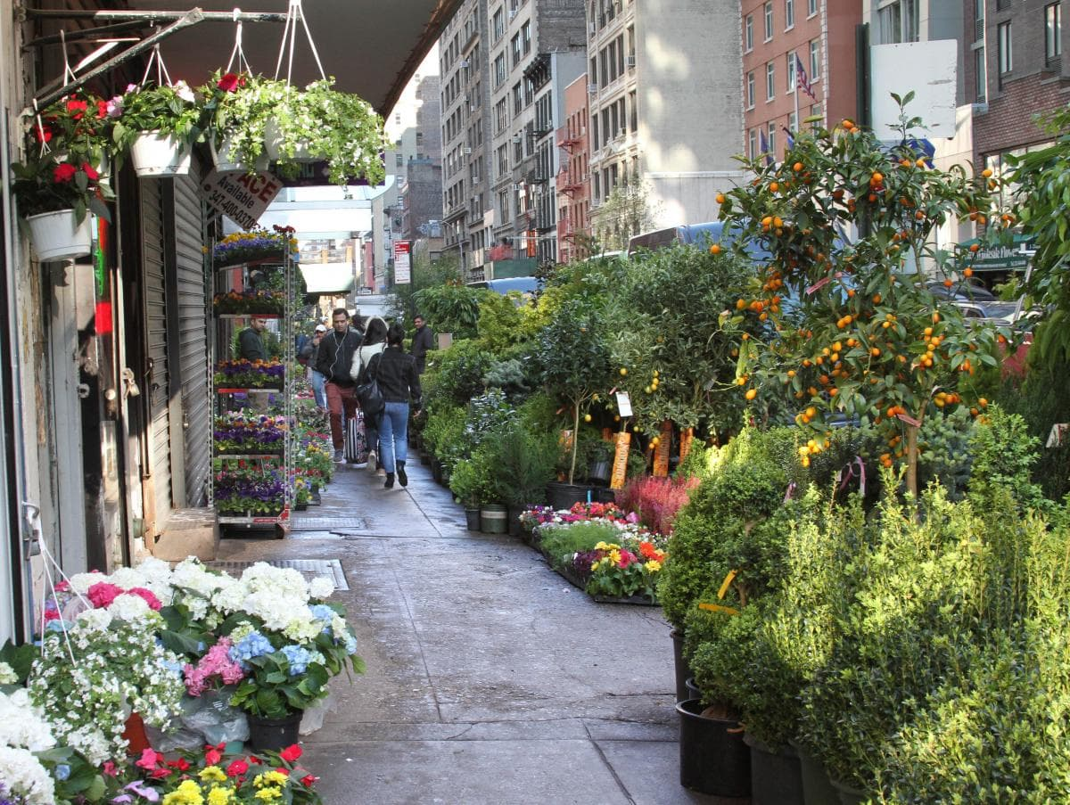 In the spring, flowers and plants spill out on to the sidewalk and at times even on to the street. Trees laden with kumquats mingle with containers of box ...